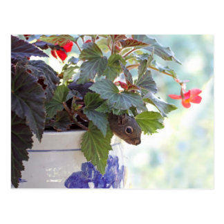 Cute Squirrel in a Flower Pot Post Cards