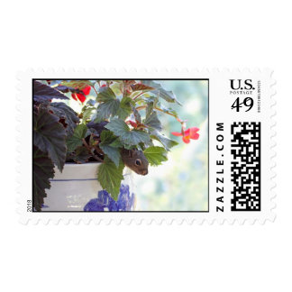 Cute Squirrel in a Flower Pot Postage Stamp