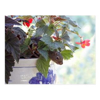 Cute Squirrel in a Flower Pot Postcard