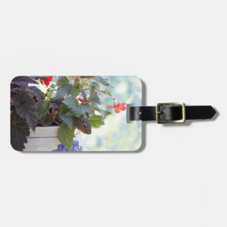Cute Squirrel in a Flower Pot Tag For Luggage