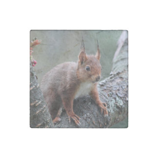 Cute squirrel in a tree stone magnet