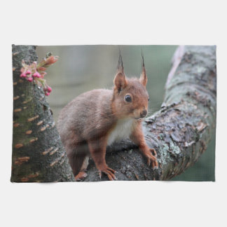 Cute squirrel in a tree hand towel