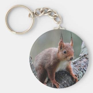 Cute squirrel in a tree keychain