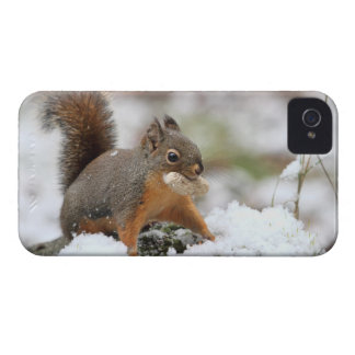 Cute Squirrel in Snow with Peanut Blackberry Bold Case