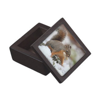 Cute Squirrel in Snow with Peanut Gift Box