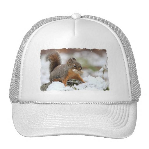 Cute Squirrel in Snow with Peanut Mesh Hat