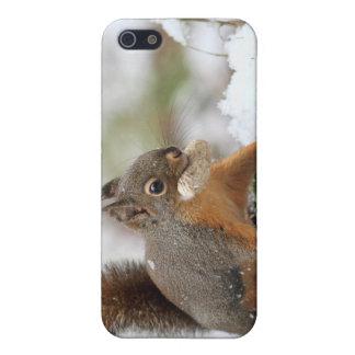 Cute Squirrel in Snow with Peanut iPhone 5 Cases
