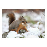 Cute Squirrel in Snow with Peanut Photo Print