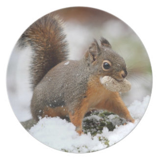Cute Squirrel in Snow with Peanut Plate