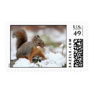 Cute Squirrel in Snow with Peanut Stamps