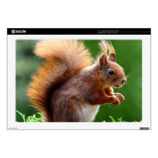 Cute squirrel in the Garden Laptop Skins
