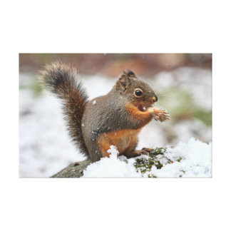 Cute Squirrel in the Snow Photo Stretched Canvas Print