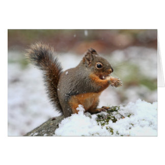 Cute Squirrel in the Snow Photo Card