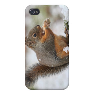 Cute Squirrel in the Snow Photo iPhone 4 Cover