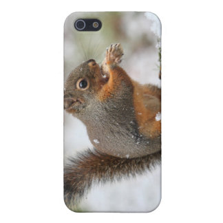 Cute Squirrel in the Snow Photo Cases For iPhone 5