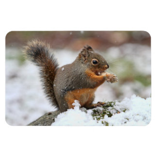 Cute Squirrel in the Snow Photo Magnet