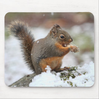Cute Squirrel in the Snow Photo Mouse Pad