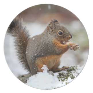 Cute Squirrel in the Snow Photo Dinner Plate