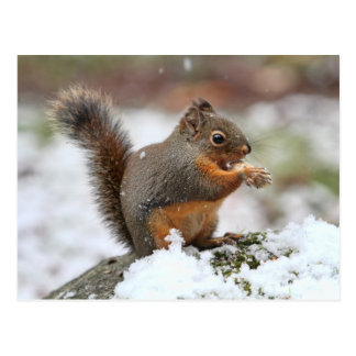 Cute Squirrel in the Snow Photo Postcard