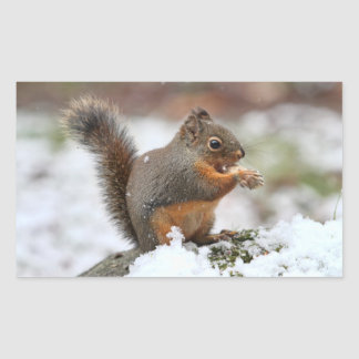 Cute Squirrel in the Snow Photo Rectangular Sticker