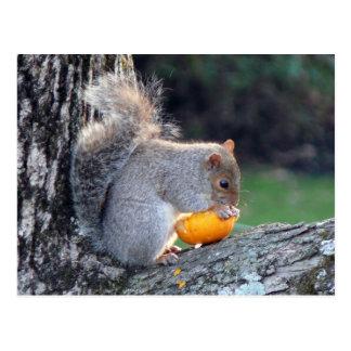 Cute Squirrel in Tree Eating Mini Pumpkin Postcard