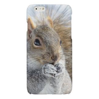 Cute Squirrel in Winter Glossy iPhone 6 Case