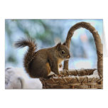 Cute Squirrel in Winter Greeting Cards