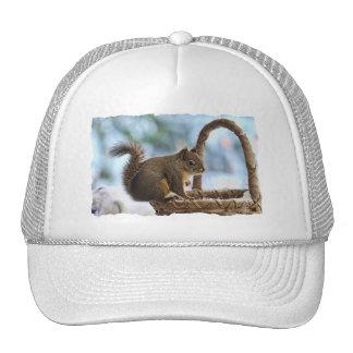 Cute Squirrel in Winter Mesh Hats