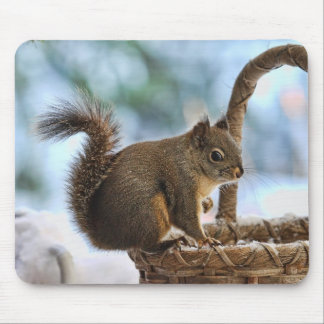 Cute Squirrel in Winter Mouse Pad