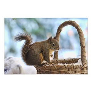 Cute Squirrel in Winter Photo