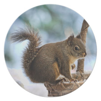 Cute Squirrel in Winter Party Plate