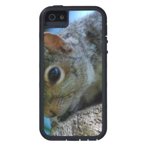 Cute Squirrel iPhone 5 Case