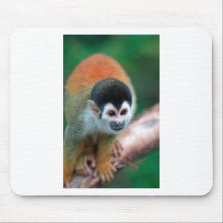 Cute squirrel monkey Panama tropical rainforest Mouse Pad