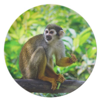 Cute squirrel monkey plate