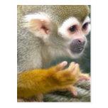 Cute Squirrel Monkey Postcard