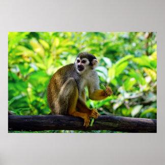Cute squirrel monkey poster