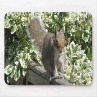 Cute Squirrel Mousepad