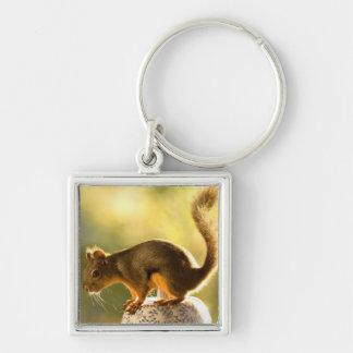 Cute Squirrel on a Cookie Jar Keychains