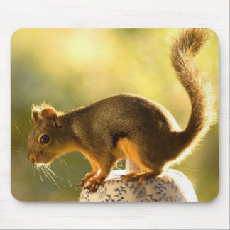 Cute Squirrel on a Cookie Jar Mouse Pad