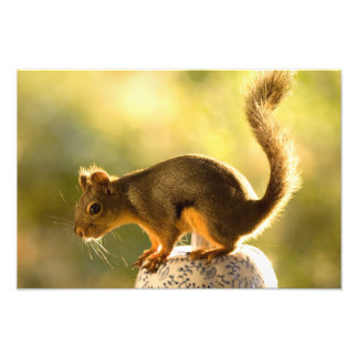 Cute Squirrel on a Cookie Jar Photograph
