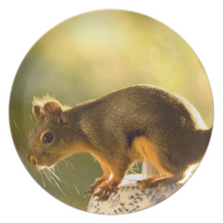 Cute Squirrel on a Cookie Jar Party Plates