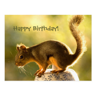 Cute Squirrel on a Cookie Jar Post Cards