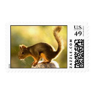 Cute Squirrel on a Cookie Jar Postage