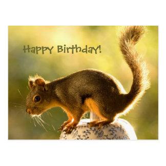 Cute Squirrel on a Cookie Jar Postcard