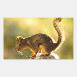 Cute Squirrel on a Cookie Jar Rectangular Stickers