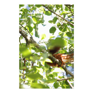 cute squirrel on tree stationery