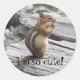 Cute Squirrel Photo Classic Round Sticker