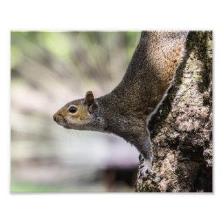 Cute Squirrel Art Photo