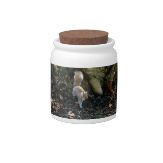 Cute Squirrel Photograph, Animal In Forest Candy Jars