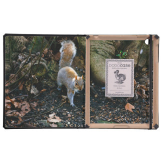 Cute Squirrel Photograph, Animal In Forest iPad Cover